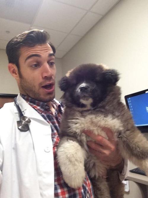 動物大好きイケメン獣医さんと動物の幸せそうな画像の数々!!の画像(28枚目)