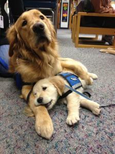 ずっと友達!仲がいい犬たちの画像が癒される!!の画像(34枚目)