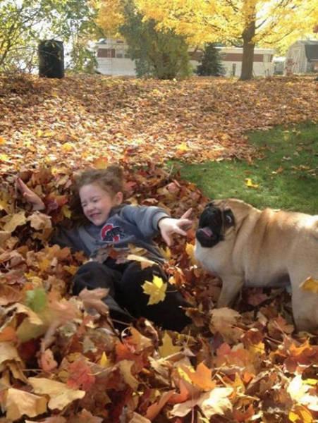 怯えてる犬の画像(38枚目)