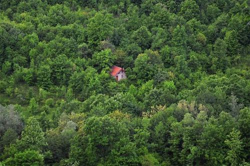森の中の隠れ家の画像(13枚目)