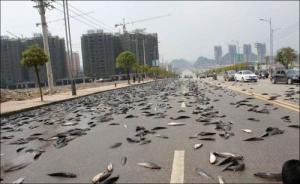 事故で魚がいっぱい落ちたの画像5