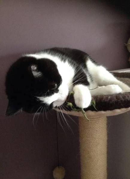 にゃんとも言えない、ちょっと困った猫の画像の数々!!の画像(38枚目)