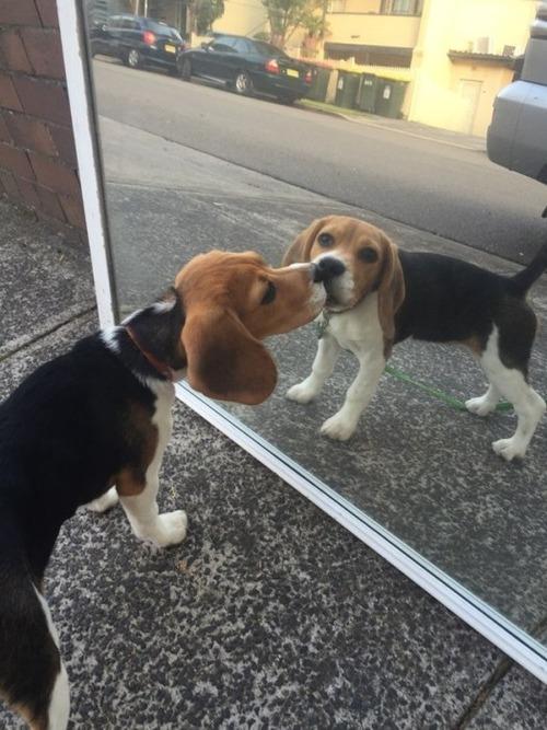 かわい過ぎる子犬の画像の数々!の画像(22枚目)