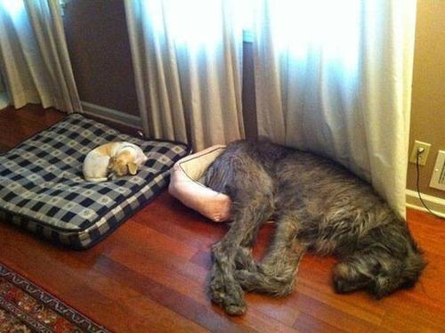 どこでも寝れる!?どこでも寝てる可愛い犬の画像の数々!!の画像(6枚目)