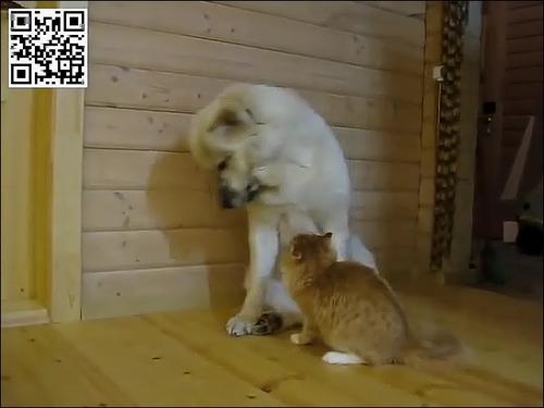 たぶん仲がよい犬と猫ww_000013904