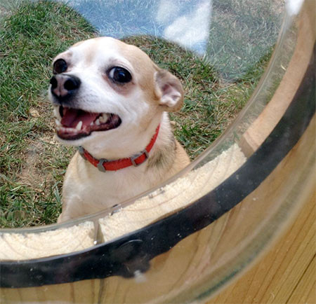 【画像】ワンちゃん大喜び!カッコいい犬用の窓!!の画像(3枚目)