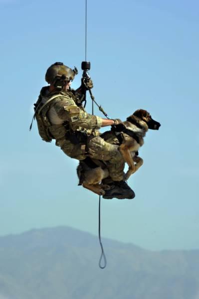 戦地での軍用犬の日常がわかるちょっと癒される画像の数々!!の画像(49枚目)
