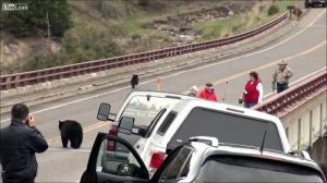 子連れのクマが観光客を追いかける怖すぎる動画…_000043420