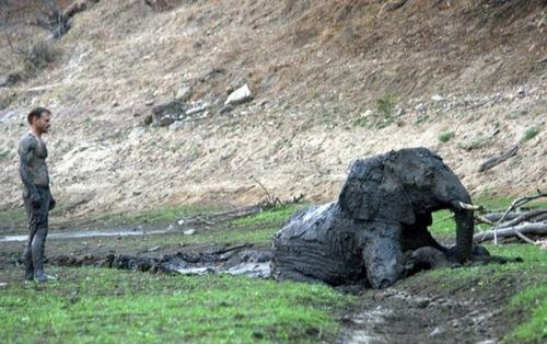 【画像】底なし沼に入った像の救出風景が感動的!!の画像(13枚目)