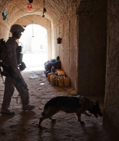 戦地での軍用犬の日常がわかるちょっと癒される画像の数々!!の画像(20枚目)