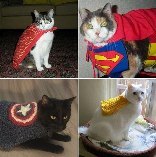 猫ちゃんのかわいいコスプレの画像(4枚目)
