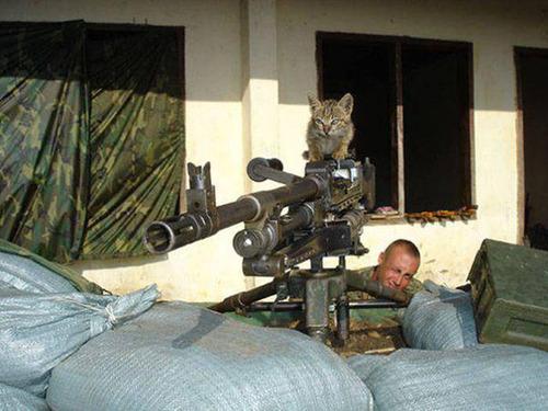 戦場にもネコは居る!!極限状態でも癒される戦場のネコの画像の数々!!の画像(19枚目)