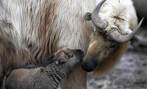 色々な動物の親子の癒される画像の数々!!の画像(20枚目)