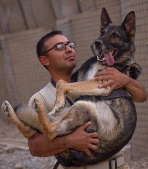戦地での軍用犬の日常がわかるちょっと癒される画像の数々!!の画像(56枚目)