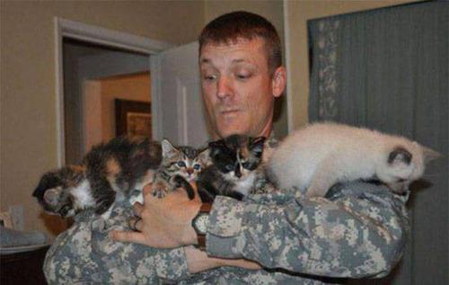 戦場にもネコは居る!!極限状態でも癒される戦場のネコの画像の数々!!の画像(14枚目)