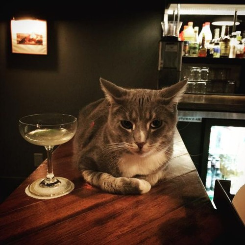 お酒大好き?お酒が好きそうな動物の画像の数々!!の画像(2枚目)