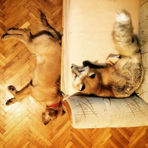 犬と猫と仲良しのキツネの画像(18枚目)