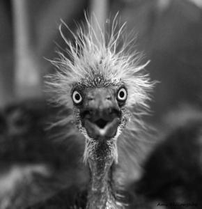 動物達が驚いている瞬間の表情をとらえた写真が凄い!の画像(45枚目)