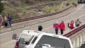 子連れのクマが観光客を追いかける怖すぎる動画…_000015620