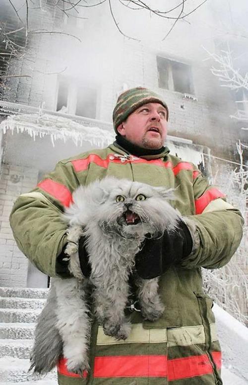 【画像】動物達も本気で助ける!ちょっと癒されるレスキュー隊の仕事の様子!!の画像(25枚目)