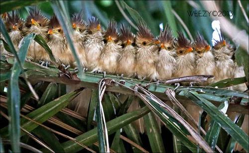 超過密!密集状態の鳥の画像がもふもふで癒されるwwの画像(17枚目)