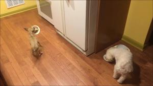 相棒の近くに器を移動して食べる犬5