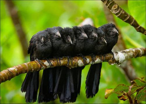 超過密!密集状態の鳥の画像がもふもふで癒されるwwの画像(12枚目)