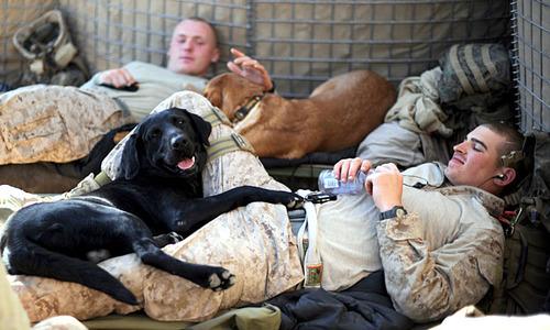 辛くても癒される!軍用犬でほのぼのしている写真の数々!!の画像(6枚目)