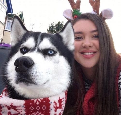ハスキー犬のクリスマスのコスプレの画像(6枚目)