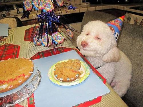 動物達の誕生日の写真の数々!!の画像(35枚目)