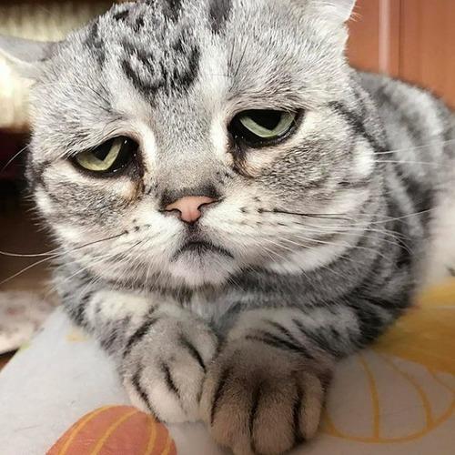 悲しくなってしまう猫の画像(3枚目)