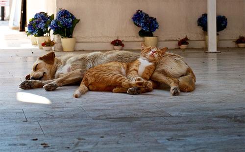 ほのぼのする!仲の良い犬と猫の画像の数々!!の画像(17枚目)