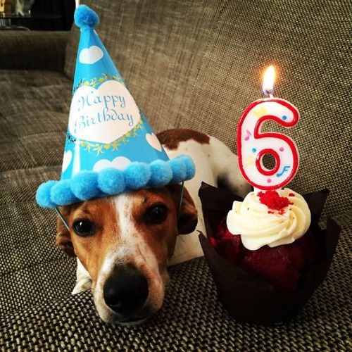 動物達の誕生日の写真の数々!!の画像(1枚目)