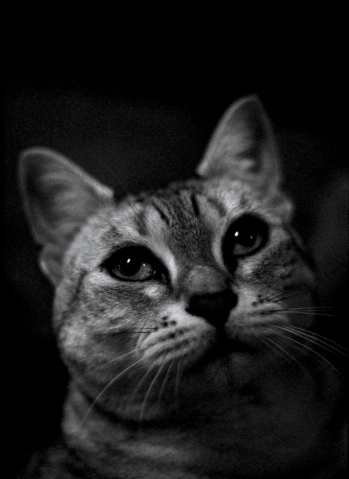【画像】自分のペットのベストショット写真の数々!!の画像(86枚目)