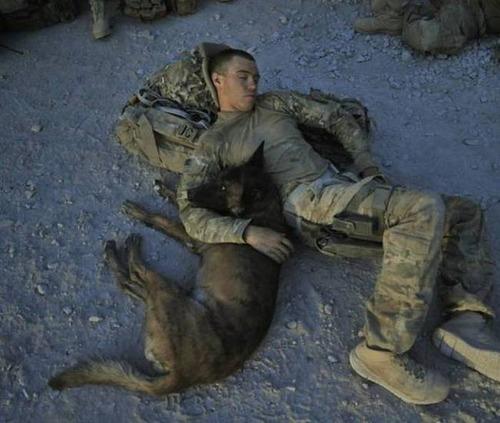 戦地での軍用犬の日常がわかるちょっと癒される画像の数々!!の画像(4枚目)