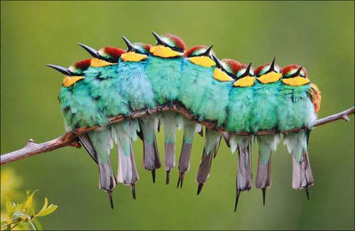 超過密!密集状態の鳥の画像がもふもふで癒されるwwの画像(5枚目)