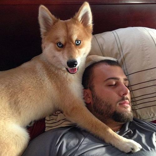 【画像】キツネなのか犬なのか分らないくらいキツネな犬がかっこ良くて可愛い!!の画像(8枚目)