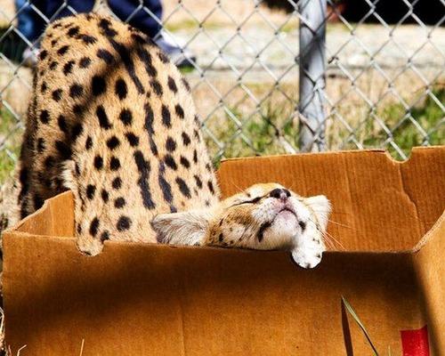 ほのぼのするけどちょっと怖い!幸せそうな動物たちの写真の数々!の画像(1枚目)