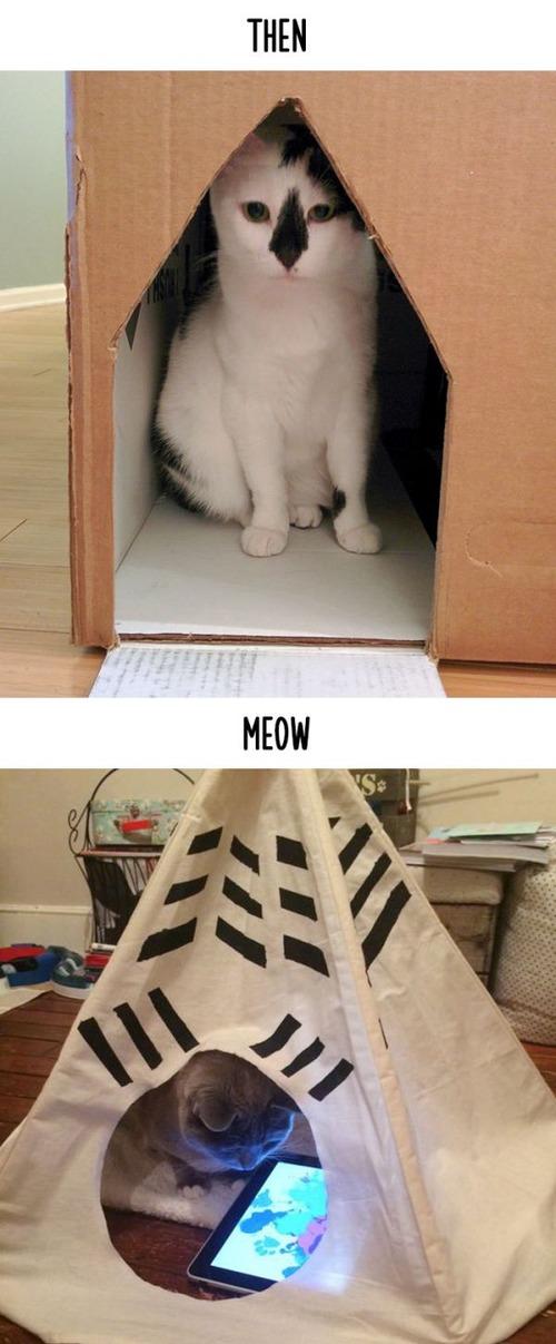 テクノロジーの進化がネコ達に与えた影響の比較画像の数々!!の画像(10枚目)
