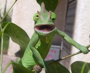 動物達が驚いている瞬間の表情をとらえた写真が凄い!の画像(1枚目)
