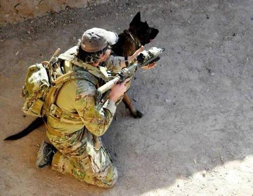 戦地での軍用犬の日常がわかるちょっと癒される画像の数々!!の画像(3枚目)