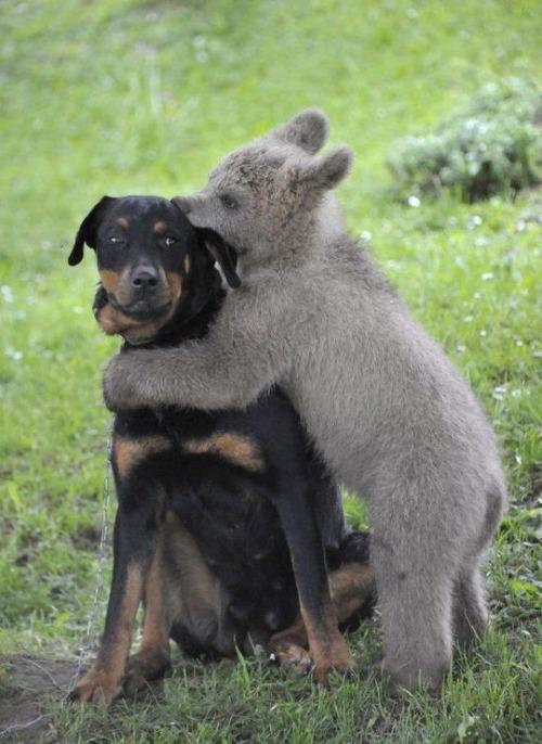 ほのぼのするけどちょっと怖い!幸せそうな動物たちの写真の数々!の画像(9枚目)
