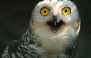動物達が驚いている瞬間の表情をとらえた写真が凄い!の画像(5枚目)