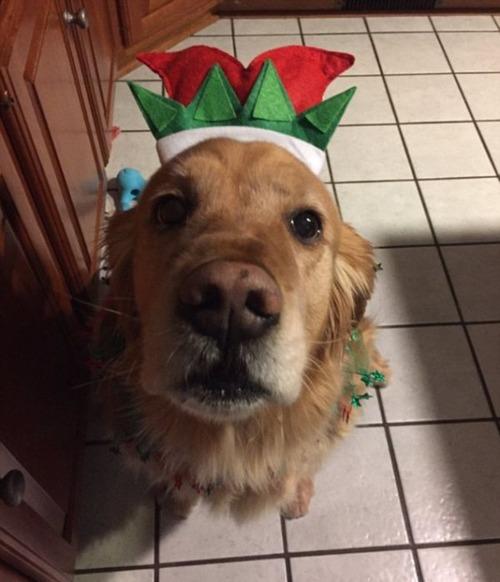 犬とクリスマスの画像(9枚目)