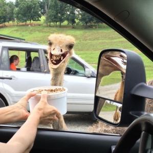 動物達が驚いている瞬間の表情をとらえた写真が凄い!の画像(4枚目)