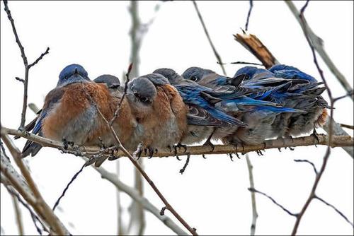 超過密!密集状態の鳥の画像がもふもふで癒されるwwの画像(11枚目)