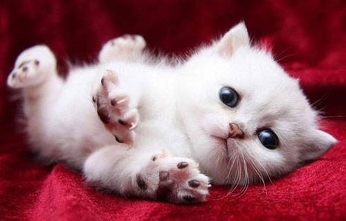 kittens_36
