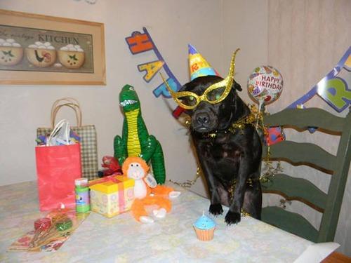 動物達の誕生日の写真の数々!!の画像(37枚目)