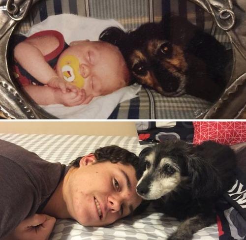 犬の成長の画像(15枚目)