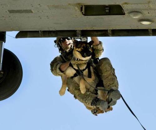 戦地での軍用犬の日常がわかるちょっと癒される画像の数々!!の画像(6枚目)